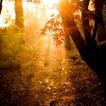 Het word herfst de dagen korten weer