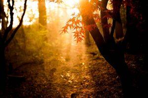 herfst blad kleur zon