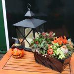 pompoen heks halloween lantaarn