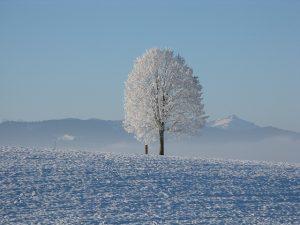 winter boom winterlandschap sneeuw