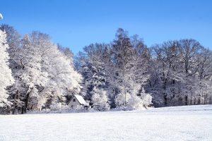 winter bos sneeuw huis
