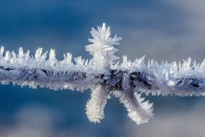 winter ijs tak rijp