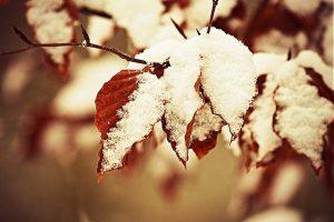 winter sneeuw bladeren