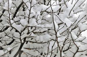 winter sneeuw takken