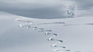 sneeuw spoor winter