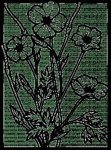 bloem kleurplaat zomer