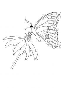 vlinder op bloem zomer kleurplaat