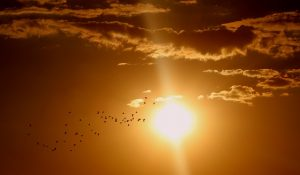 zonsondergang zon vogel