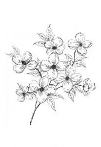 kleurplaat pinksterbloem bloem