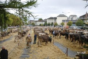 veemarkt koe