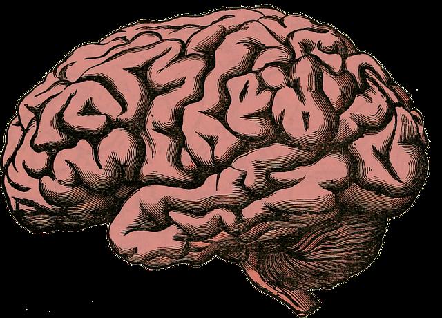 hersenen tekening