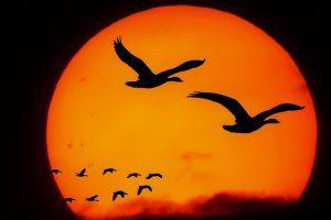 trekvogel zonsondergang zon vogel