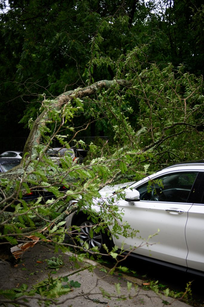auto boom schade